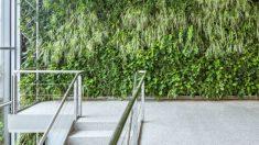 Paredes vegetales: pulmones sostenibles, eficientes y confortables en la ciudad