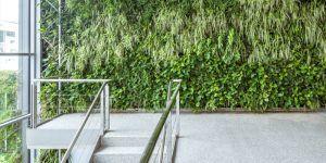 paredes vegetales de clevergreen